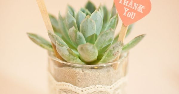succulent favors on votive candle holders