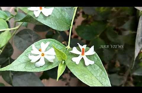 Food Tips In Tamil Key 2592938882 Gardeningtipsonterrace In 2020 Morning Glory Flowers Beautiful Flowers Pretty Flowers