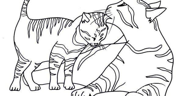 Pin Auf Biby Katzen