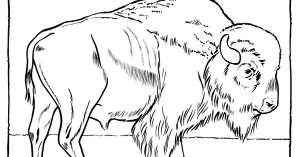 Buffalo Head Coloring Page Buffalo coloring pages