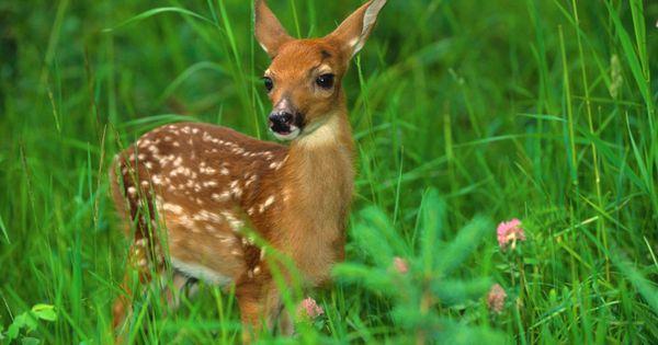 Baby Deer2