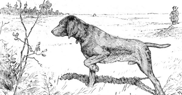 Coloring Page Hunting Dog Dog Print Art Dog Coloring Page