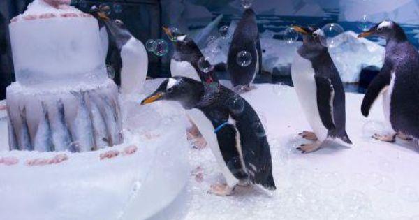 Aquarists At The Sea Life London Aquarium Threw A Party For Its