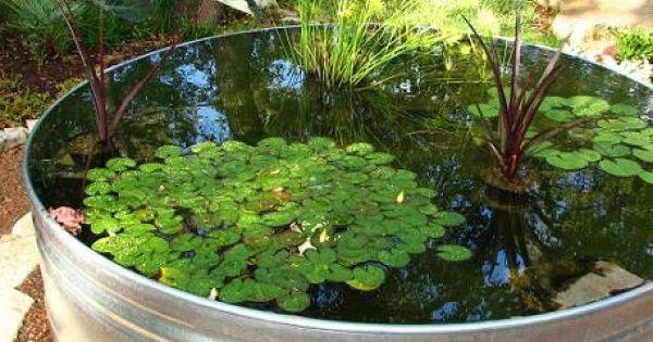 C mo hacer un estanque acu tico con plantas y peces for Como hacer una granja de peces