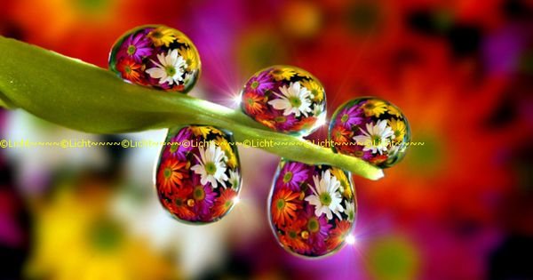 Flowers in dewdrops