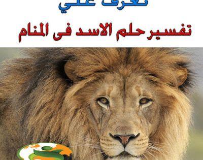 رمزيات تفسير حلم رؤية الاسد فى المنام ابن سيرين والنابل Blog Posts Lion Kodi