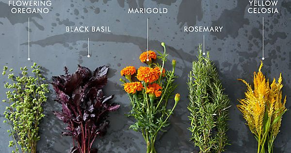 Flowering Oregano Black Basil Marigold Rosemary Castle Yellow Celosia Vase Arrangements