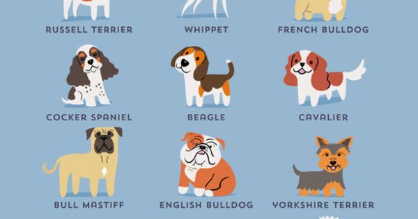 Adorable Drawings of Dog Breeds, Grouped By Their Place of Origin ...