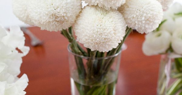 White Lunar Buds - A member of the disbud chrysanthemum family