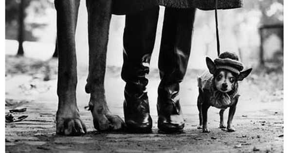 Elliott Erwitt - NEW YORK CITY, 1974 | From a unique collection
