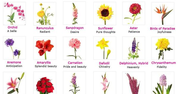 Flowers, Their Meanings, And Which Ones NOT To Give Your