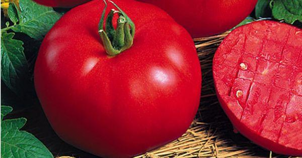 Tipps Für Eine Reiche Tomatenernte | Garten Gemusegarten Anlegen Tipps Tricks Ernte