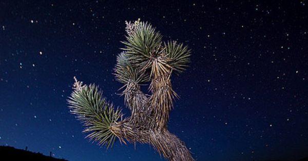 Joshua Tree & Stars | Death valley national park, Death ...