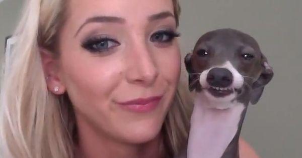 SMILE. I NEED a italian greyhound! Kermie rocks!