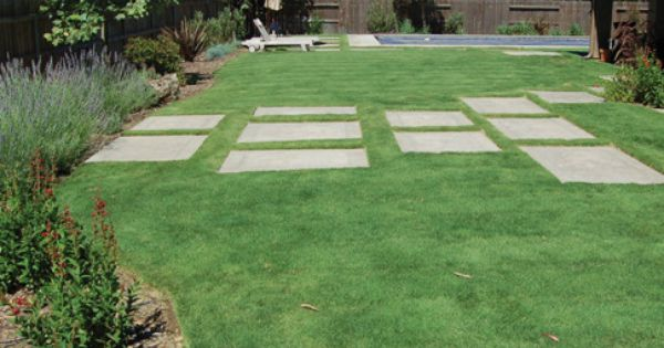 This is a buffalo grass lawn it 39 s highly drought tolerant for Best low maintenance grass