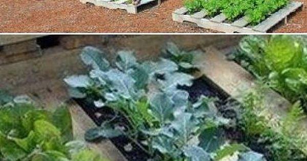 Reuse wooden pallets and make a cute little green garden  .: G R O W :.  Pinterest ...