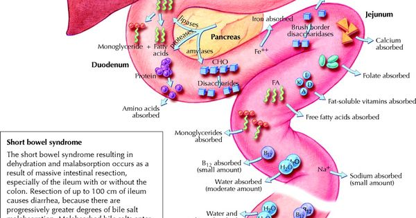 gi absorption of nutrients