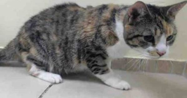 Gone But Not Forgotten To Be Destroyed 1 12 14 She Needs Someone To Save Her Life Tonight And Get Her Some Competent Veterinary Care Brooklyn New York Leben