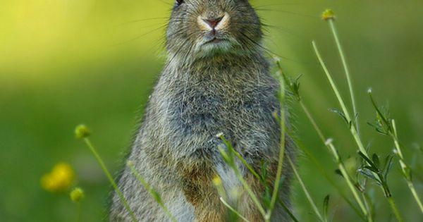 Sazureaparadise rabbit0011 by jonhawkins1 on flickr for Maladie poules perte plumes