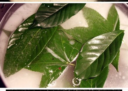 How To Make Those Cool Skeletonized Leaves! Let Leaves soak in Arm