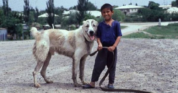 Kuchi Dog Every Dog Breed Rare Dog Breeds Unique Dog Breeds