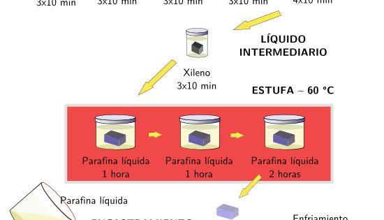 Inclusion En Parafina Parafina Parafina Liquida Histologia