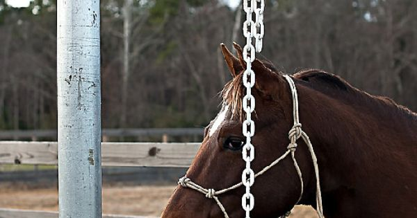 Patience pole all about horses pinterest patience for Negative show pool horse racing