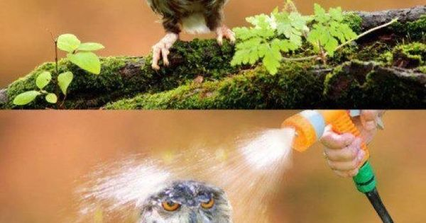 moist owlet. hahaha too funny
