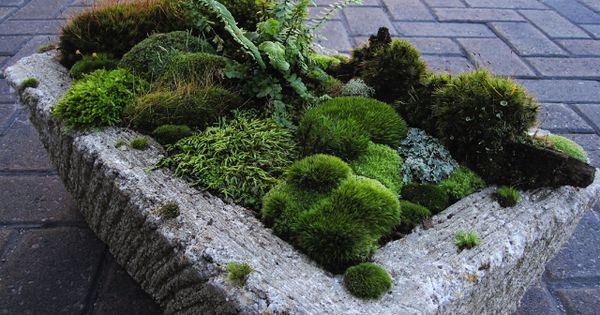 Hypertufa Moss Garden By David Spain Of Moss And Stone
