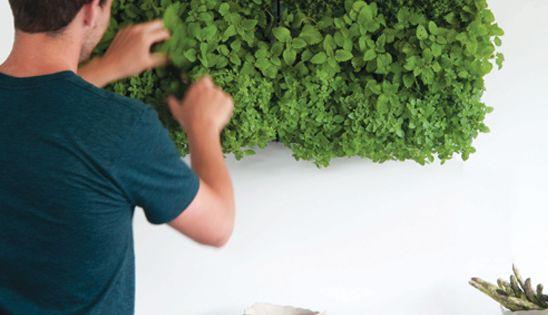 Pflanzenwand karoo grau pflanzen drinnen pinterest for Pflanzen drinnen