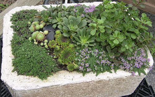 How To Make A Hypertufa Planter Gardener 39 S Supply