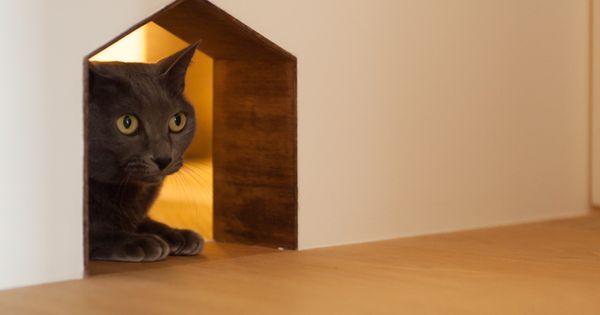 中古を買ってリノベーションの相談はecodeco リノベーションの事例写真たくさんあります 不動産購入 リノベの相談無料 リノベーション インテリア 東京 ペット 猫 Cat 猫 インテリア ねこ インテリア 猫部屋