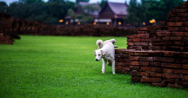 Dogtime The Place For Dog Breeds Pet Adoption Pet Insurance And Expert Pet Advice Dog Insurance Pitbull Puppy Care Pet Insurance Cost