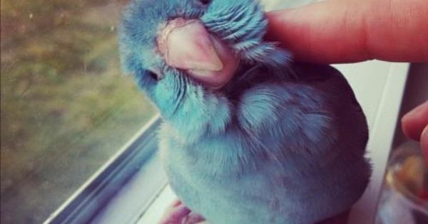 I want to pet this little bird.