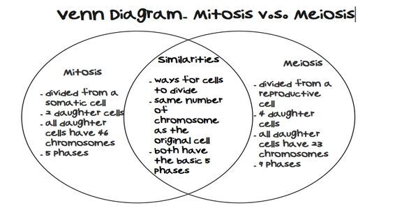 Pin On Cell Cycle Mitosis And Meiosis