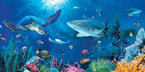 Top 27 Sea Animals Wallpapers In Hd: Sea Animals - Google Search