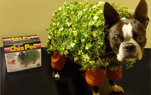 hilarious chia dog costume for halloween