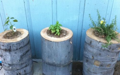 DIY tree stump planters - love it for an herb garden