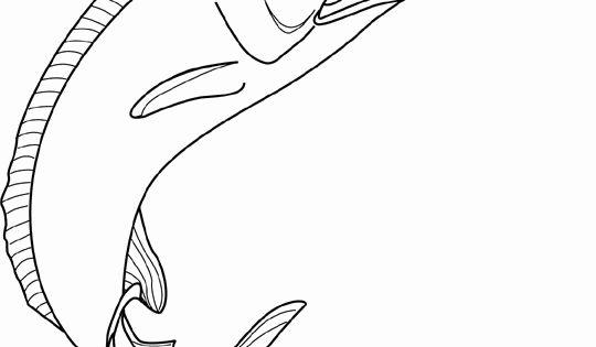 line drawing swordfish