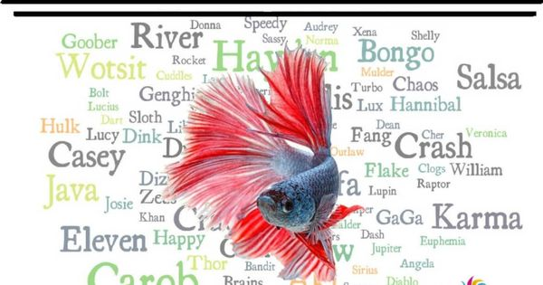 650 Betta Fish Names For All Different Types And Colors Betta Fish Betta Fish