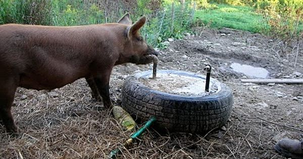I Love This Idea For Watering The Pigs