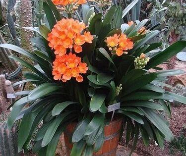 Terbaru 24 Foto Bunga Natal Xmas Dan Tahun Baru Foto Ini Bingkai 2 Aplikasi Gratis Dan Mudah Digunakan Dan Dapat Didownload Bunga Rangkaian Bunga Foto Natal