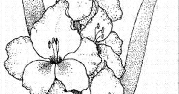 Flowersgladiolus CLIP ART DOWNLOADS PRINTABLES