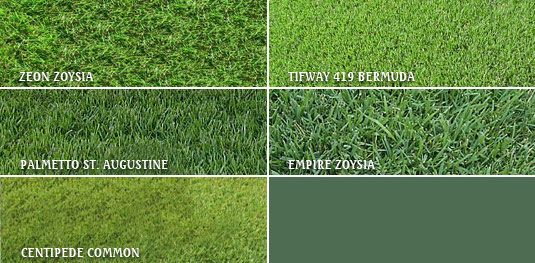 South Carolina Sod Centipede Common Palmetto St Augustine Sapphire St Augustine Empire Zoysia Tifway 419 Bermu Lawn Grass Types Bermuda Grass Grass Care