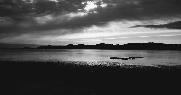 sea wolf essay