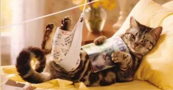 Cat In A Leg Cast Reading A Book Cats Cats And Kittens Crazy Cats