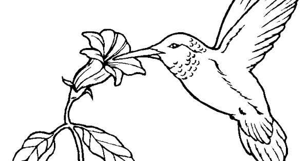 Hummingbird Birds Coloring Pages Bird Coloring Pages Bird