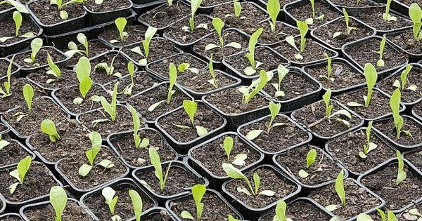 Les bonnes p riodes de semis et de r coltes calendrier - Potager pour les nuls ...