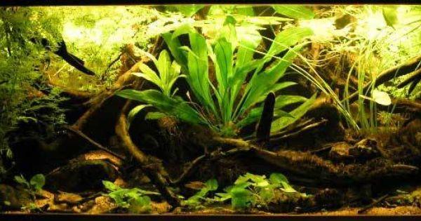 Kak Uhazhivat Za Akvariumnymi Rybkami Obshie Rekomendacii Akvaskejp Tropical Fish Nature Aquarium Tropical Freshwater Fish