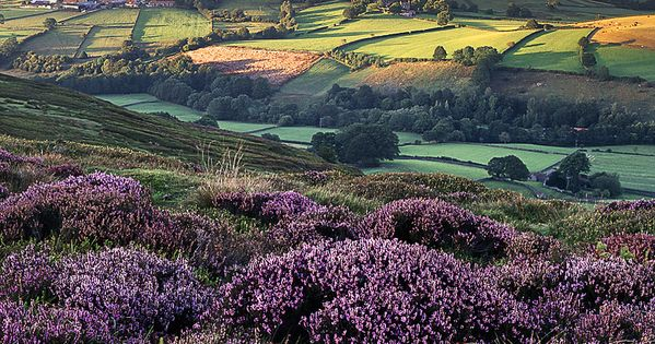 Rosedale, North Yorkshire, England | what a rich color scheme & it's